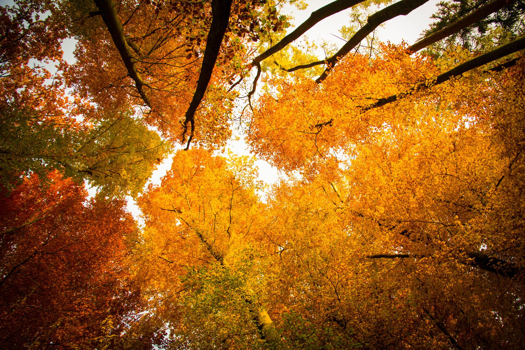 «Herbstglut» Entlisberg, Zürich - CH