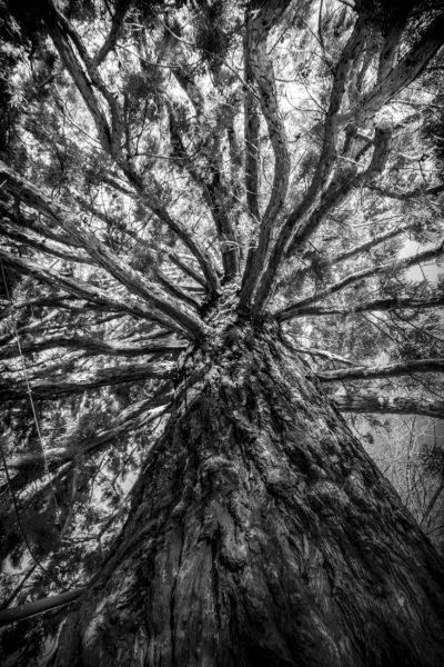 sequoia, RoteFabrik - Zürich/CH
