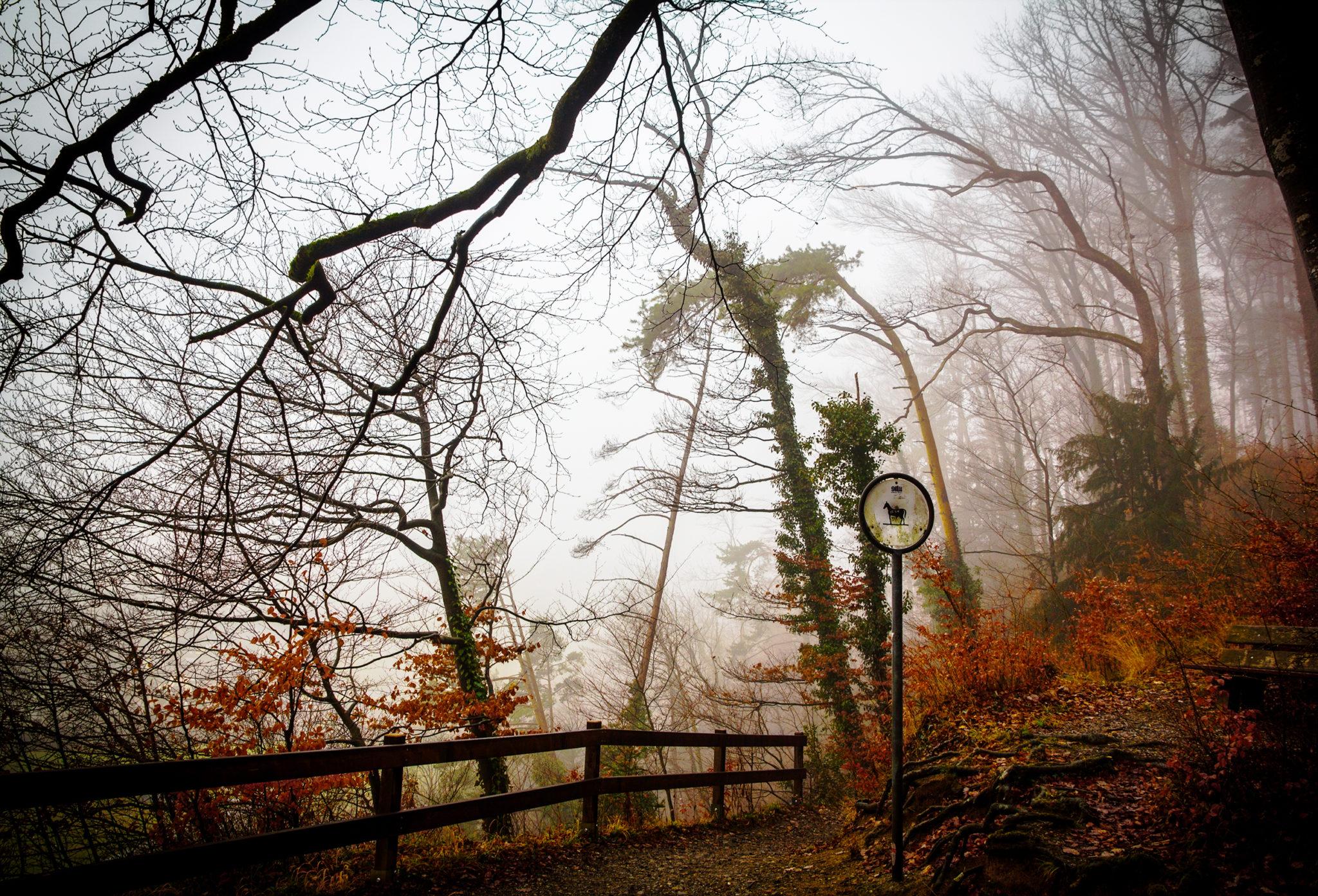 «Nebelwesen» Entlisberg, Zürich - CH